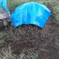 農業実践教室第21期:6回目~落花生のぼっちを作りました&枝豆、小豆・・と、この時期豆ラッシュです!