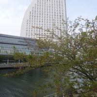 横浜again 9