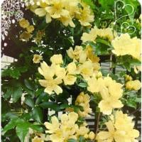 黄色のお花が鮮やかです(*^_^*)