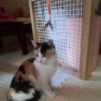 可愛いミケ子猫、入りました