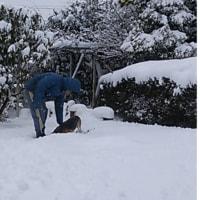 今更の・・大雪でして