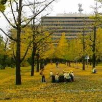 熊本県庁の銀杏並木