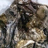 牡蠣 oysters !!!