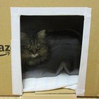 新入り猫お迎え 大猫様がやってきた - 大鳴き問題→基地を与えてみた
