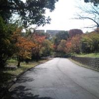 桜並木も色づいて