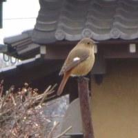 春を探しにフローラ黒田へ行ってきました。