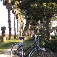 砂浜のサイクリング