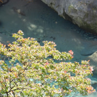 紅葉の称名滝