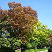 まだ紅葉には早いけど。鶴舞公園散策