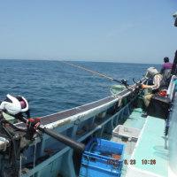 福田沖イサキ釣り  良く釣れました!