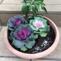 花の苗植え