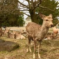仔鹿が目立つ