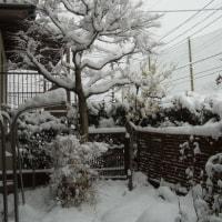 大雪:広島