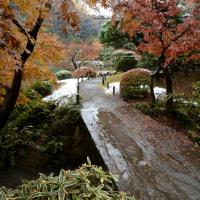 旧古河庭園 紅葉に雪・・5