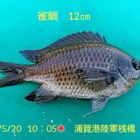 笑転爺の釣行記 5月20日☀ 浦賀(雀鯛)・久里浜