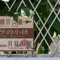 """須磨離宮公園""""王侯貴族のバラ園"""""""