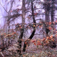 落ち葉のツリー