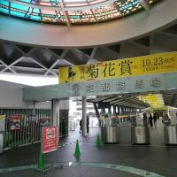 菊花賞を観に、京都競馬場へ。