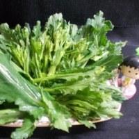 ケールの花は野菜!!
