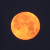 朝焼けの月