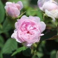 「秘密の花園」訪問記