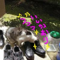 ニャンちゃん経費3