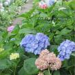 記憶に残したい花風景・2016 ~磯山神社の紫陽花
