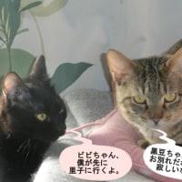 黒豆君、里子に行く。