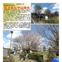 花巡り 「桜-その390」 区立桜丘宇山緑地