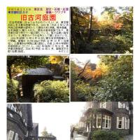花巡り 「バラ-55」 旧古河庭園
