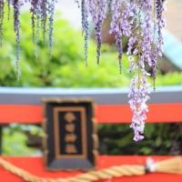 〔のだふじ巡り〕春日神社