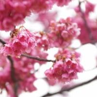 季節が移り花も移り