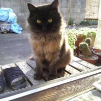 ねこ・ネコ・猫。