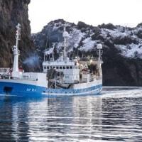 シシャモは終漁、次はホワイテングだ    アイスランド