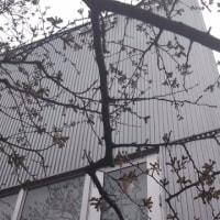 九州画材の入口の桜の開花