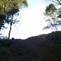 消える森3