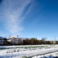 雪の次の日の朝 & どんぐり独楽の素作り