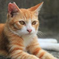 瀬戸内A島の猫たち 2016年 10月 その11