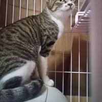 #013 -'17.    保護猫ナナちゃんのリハビリ状況