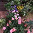 テラスの花の香