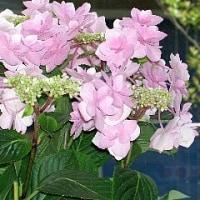母の日プレゼントの花5