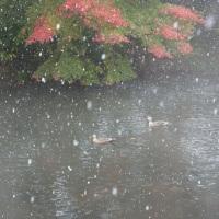 初雪と紅葉再び