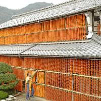 岐阜県山県市の連柿です