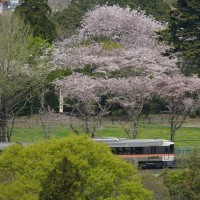 春の秘境駅号