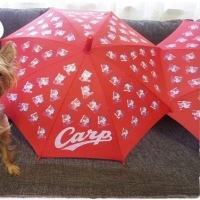 去年に引き続き、今年もラッキー赤傘ゲット。