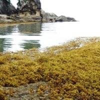 竜串海岸~桜浜20170525