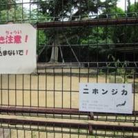 天王寺動物園なう(その2)