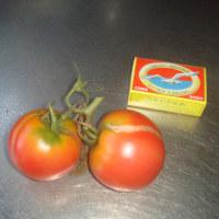 たちまち赤くなりました、三年目のトマト