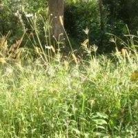 草、ぼうぼう
