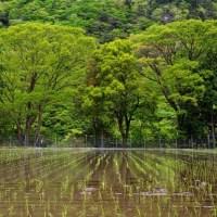 小椋谷の新緑